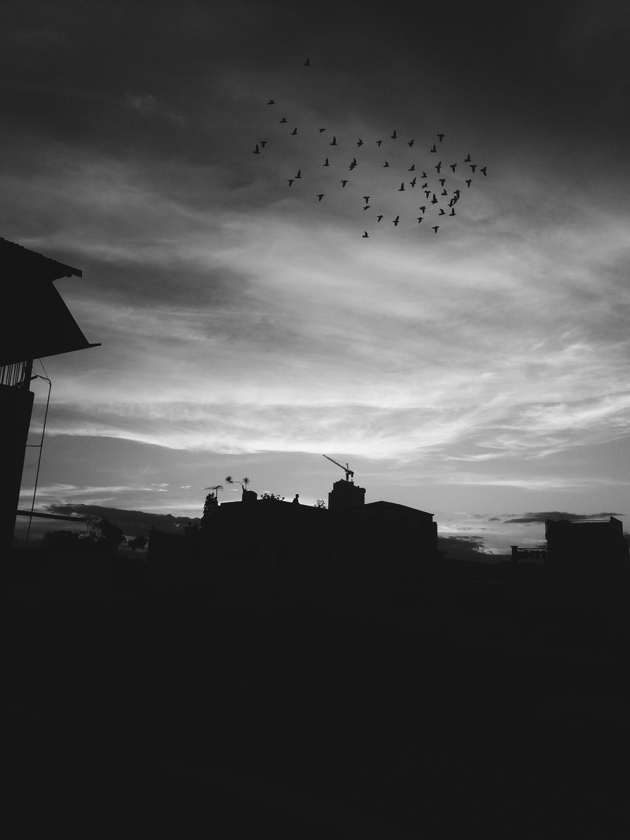I see the world in balck and white. Silhouette Cloud - Sky Sunset Flying Sky Bird No People Flock Of Birds Outdoors Animal Themes Nature Day