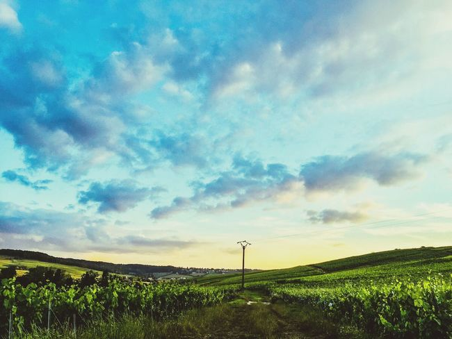 Vivelafrance Nature Photography EyeEm Nature Lover Nature_collection Wine France Wine Grapes Green Grapes Champagne Grapes Blue Sky And Clouds Champagne No People Champagne Region Nopeople