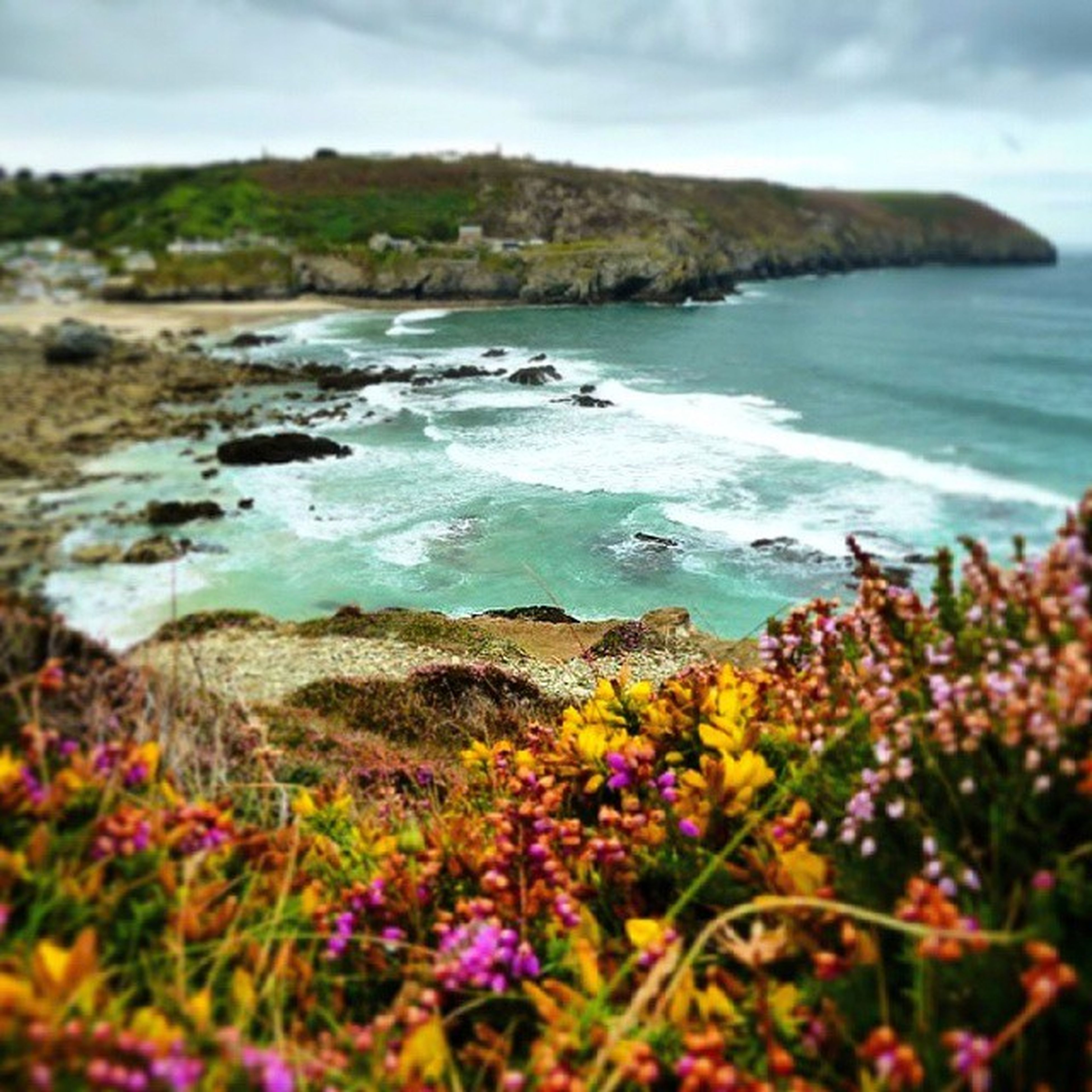 flower, water, beauty in nature, sea, tranquil scene, nature, scenics, tranquility, plant, growth, sky, mountain, rock - object, freshness, beach, wildflower, day, focus on foreground, fragility, outdoors