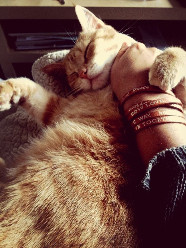 Tigerlou Enjoying Life Cat Relaxing