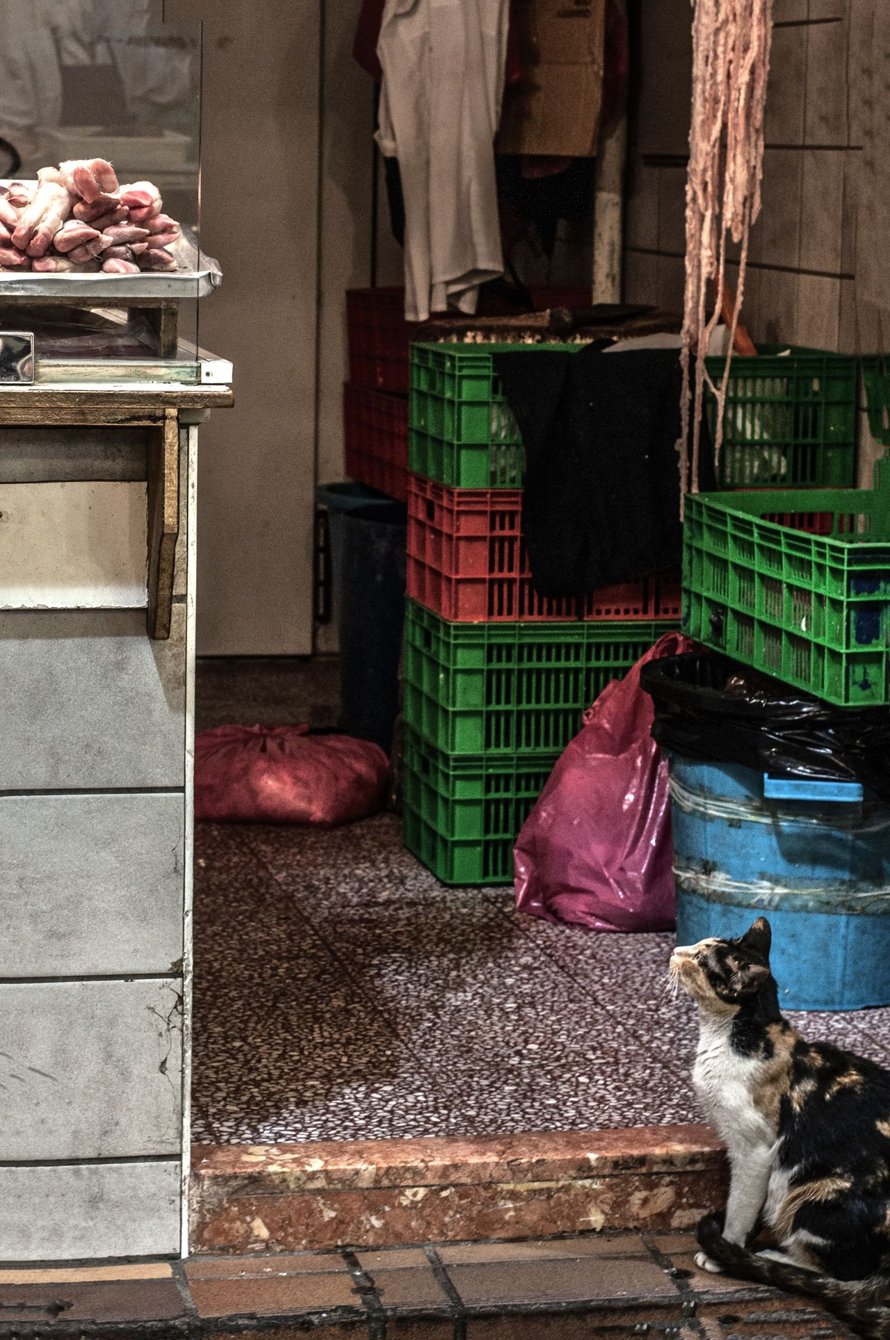 Animal Themes Butchershop Cat Cat Lovers Eye4photography  Feline From My Point Of View Hunger Hunger Games Hungry Looking Up Meat! Meat! Meat! Souk Stray Cat Streetphotography