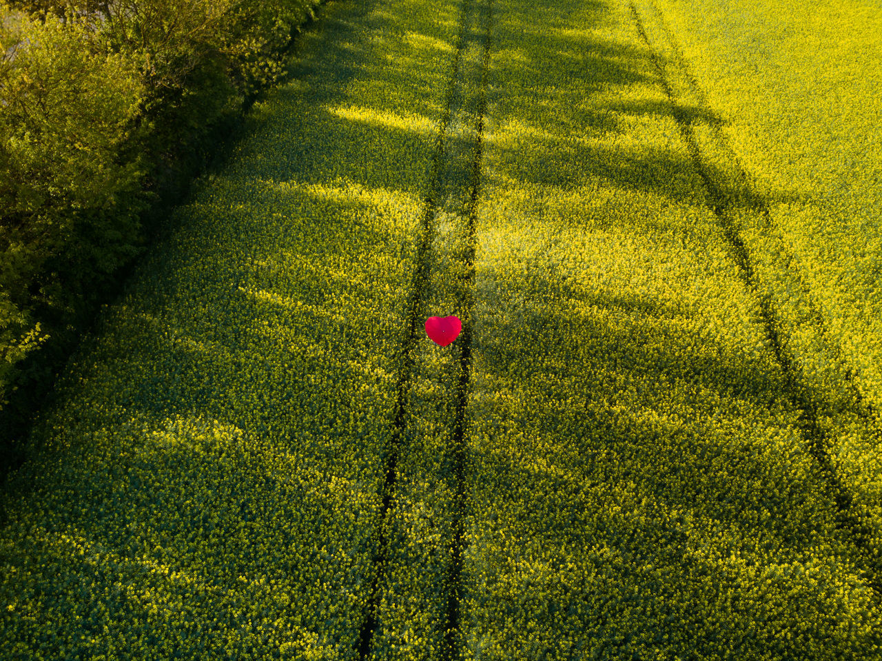 Beauty In Nature Day Grass Green Color Growth High Angle View Love Nature No People Outdoors Raps Rapsfeld Shadow Sunlight