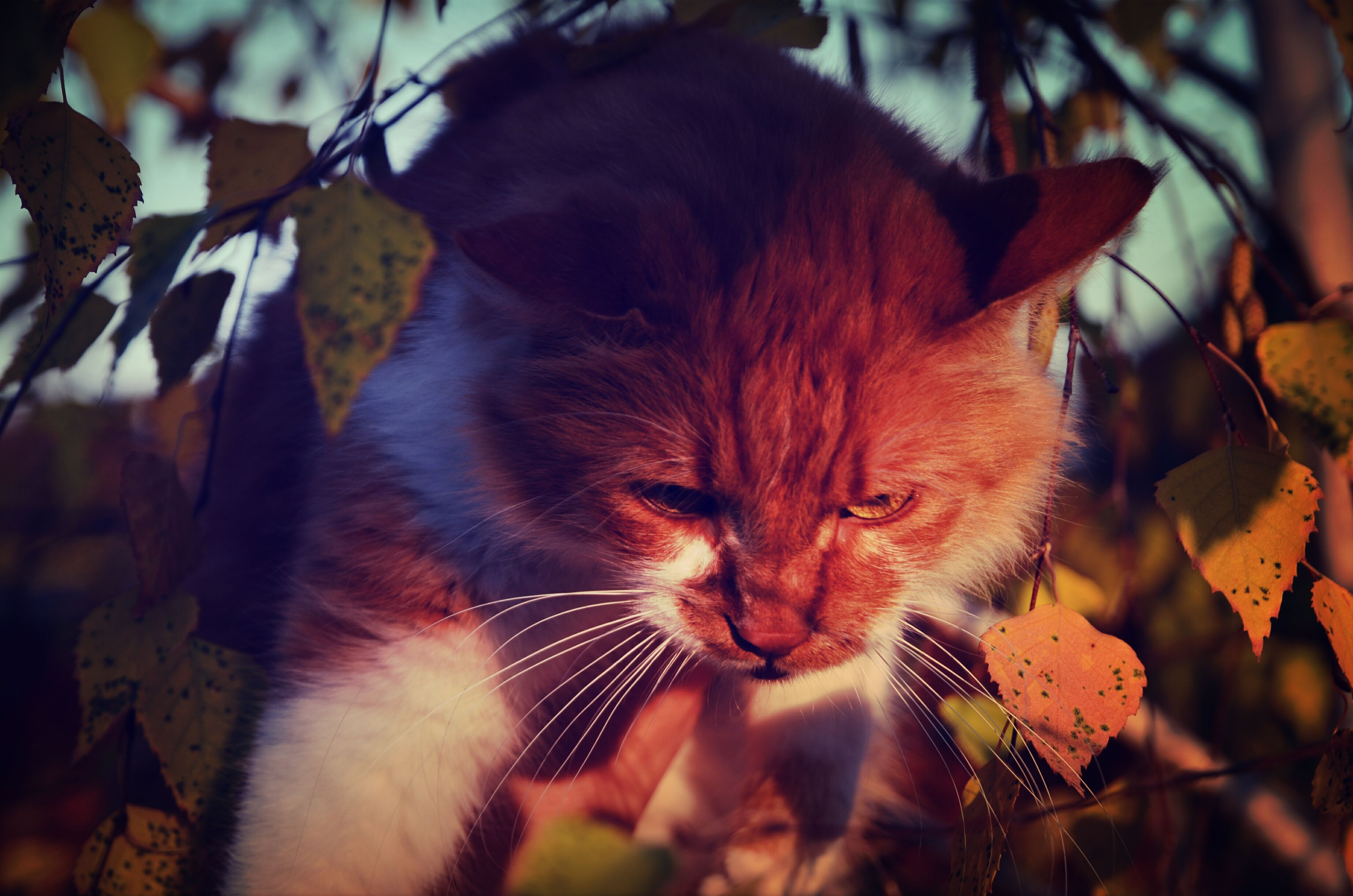 animal themes, mammal, one animal, domestic cat, focus on foreground, domestic animals, whisker, close-up, pets, feline, leaf, cat, brown, nature, selective focus, day, outdoors, portrait, plant, no people