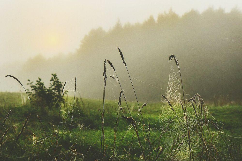 Travel Destinations Village Hazy  Russia Landscape Scenics Perfect Color Green Color Spiderweb Cobweb Weather Foggy Reflection Look Like Beauty In Nature Sky