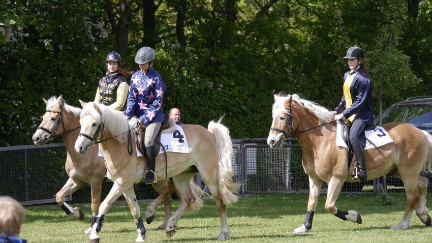 Horse Riding Haflinger Hannover Pferderennbahn Auf Der Bult Horse EyeEm Best Shots