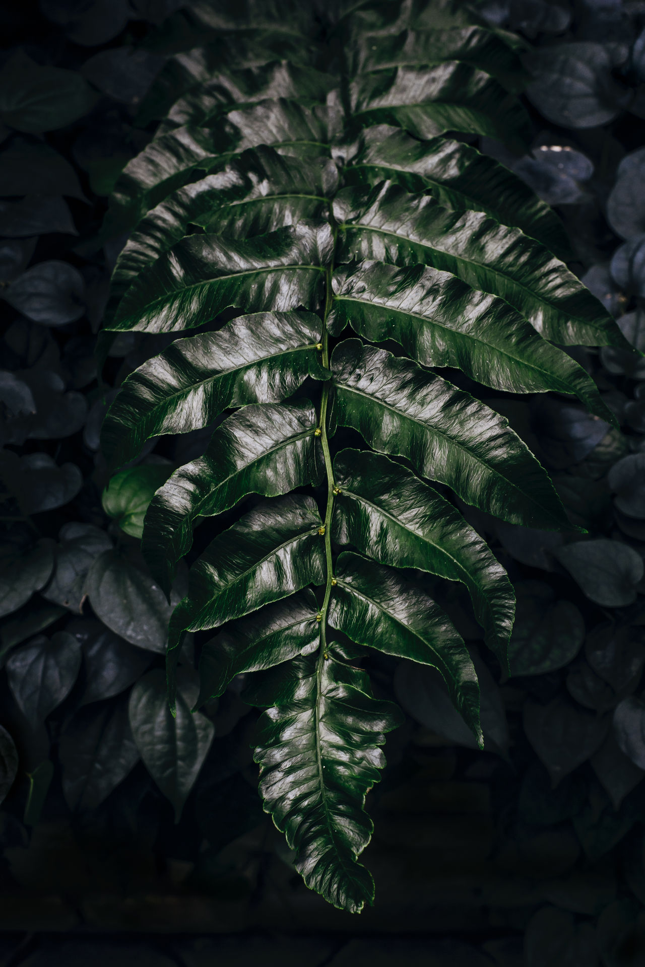 Single and proud Beauty In Nature Close-up Fern Fragility Freshness Green Color Green Leaves Greenery Growth Huge Leaf Leaf Nature No People Outdoors Plant