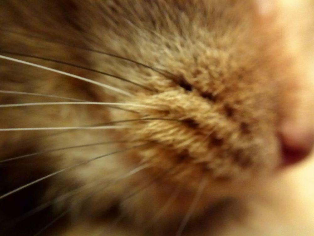Garik Macro One Animal I LOVE PHOTOGRAPHY Domestic Cat No People Beatiful Cat One Cat 😻my Sweety Cat😻 😻😻😻❤️ Domestic Animals Animal Themes I Love My Cat ❤ Red Cat♡ My Cat My Beautiful Cat🐈 My Beautiful Cat!