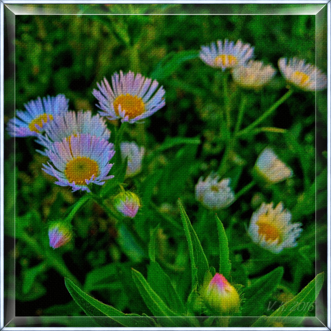 Sweet little flowers Nature Flower Fragility Beauty In Nature No People Plant Growth Close-up Flower Head Outdoors Freshness Day Photo Art