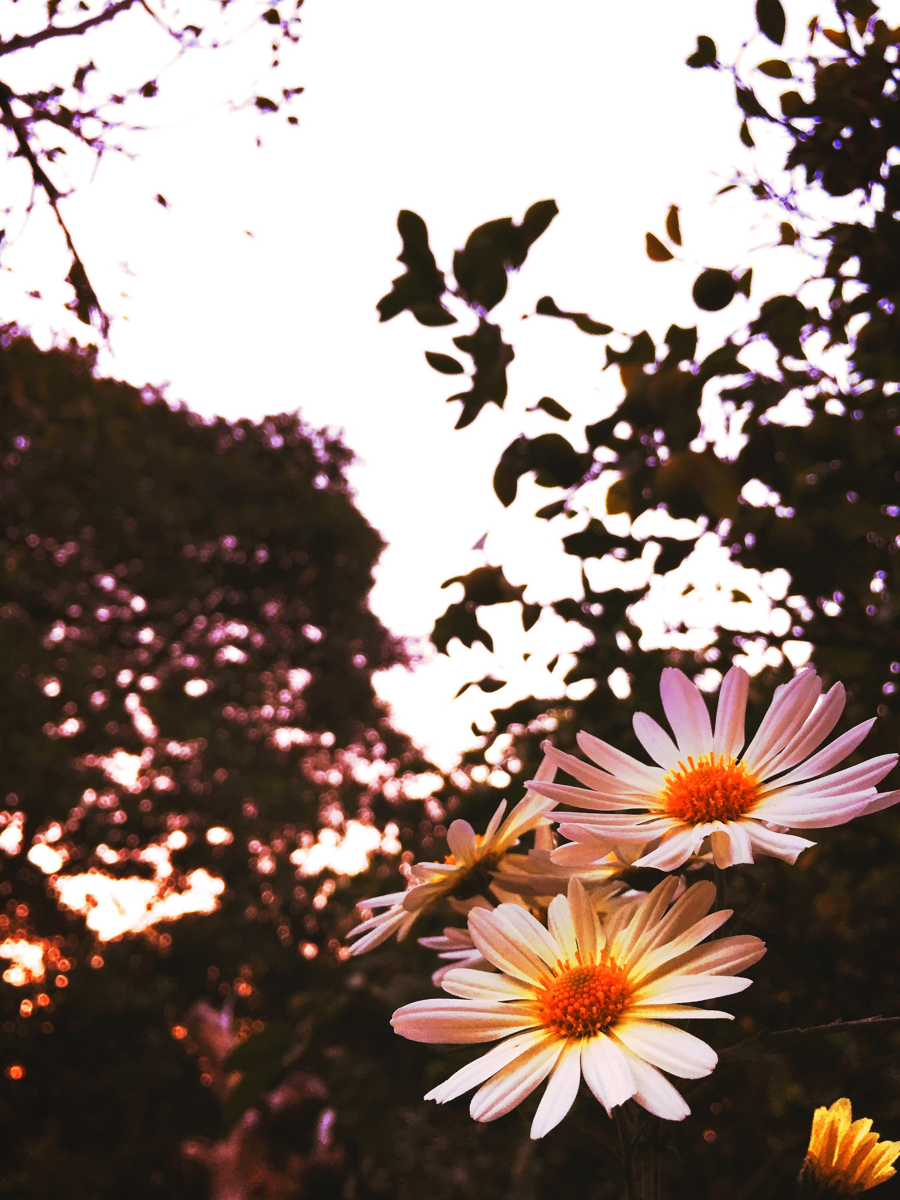 flower, petal, fragility, freshness, growth, beauty in nature, blooming, flower head, nature, in bloom, plant, focus on foreground, tree, blossom, close-up, leaf, branch, springtime, botany, outdoors
