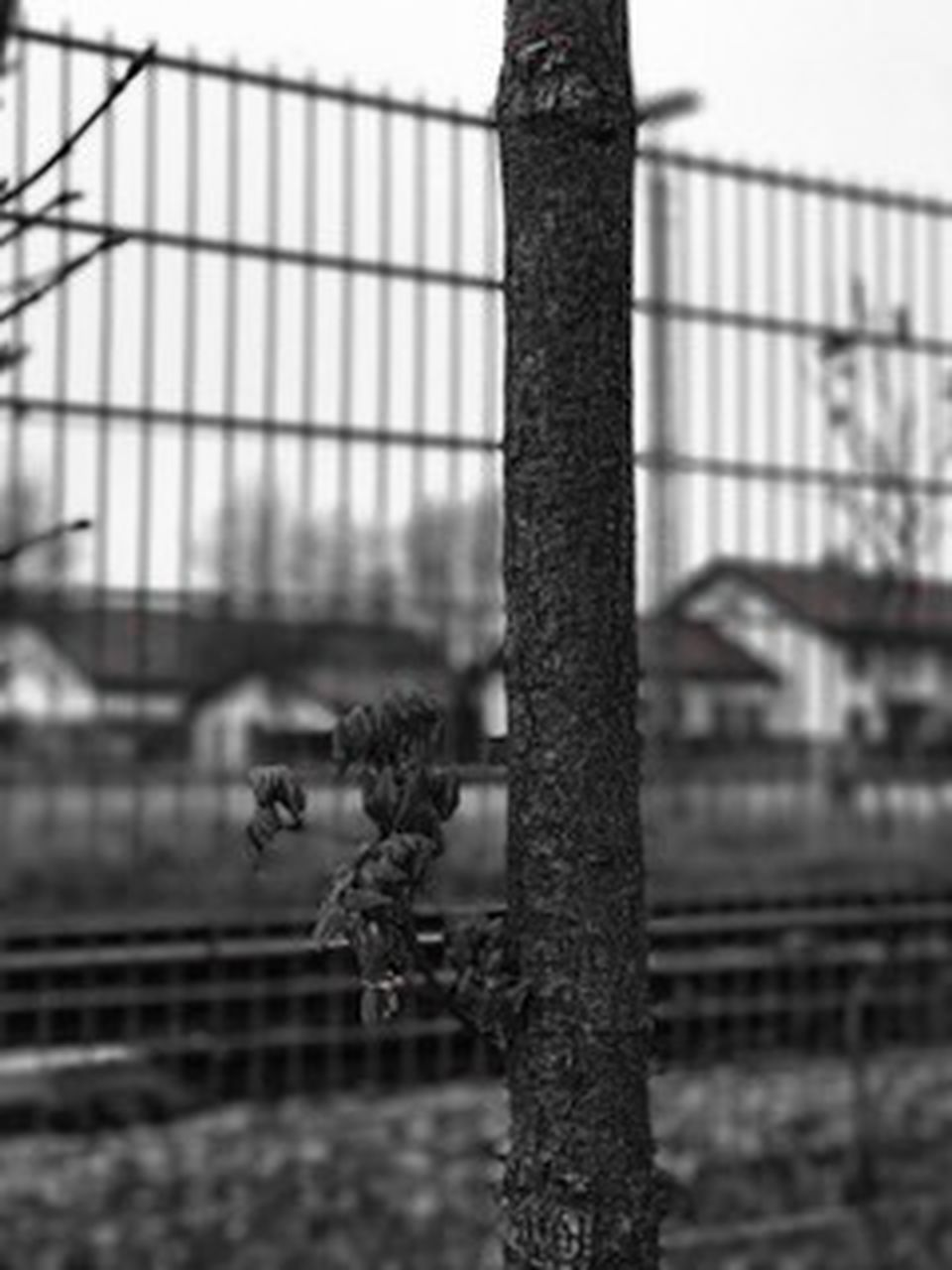 focus on foreground, prison, day, outdoors, no people, close-up