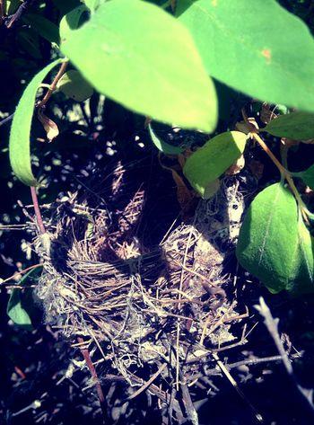 Birds Nest Bird Nest Birdsnest Nature Nice Cool Environment