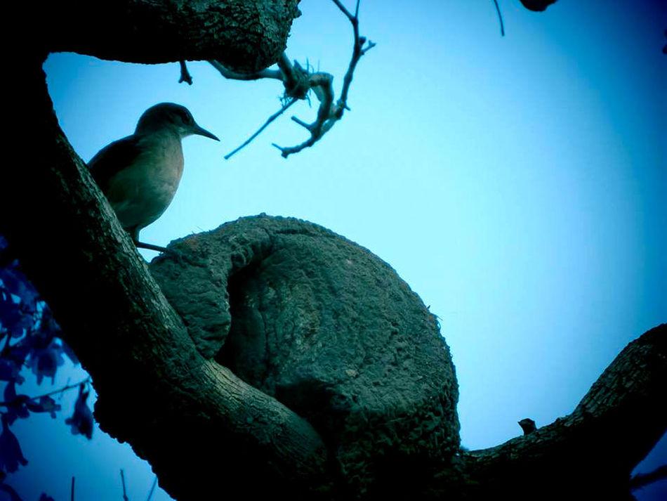 Animal Themes Bird Buenos Aires Hornero Nature One Animal Outdoors Ovenbird Rosedal Spring Sunlight