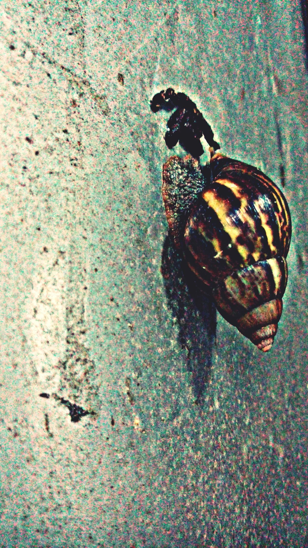 Saturday vs Snail . Vascocam