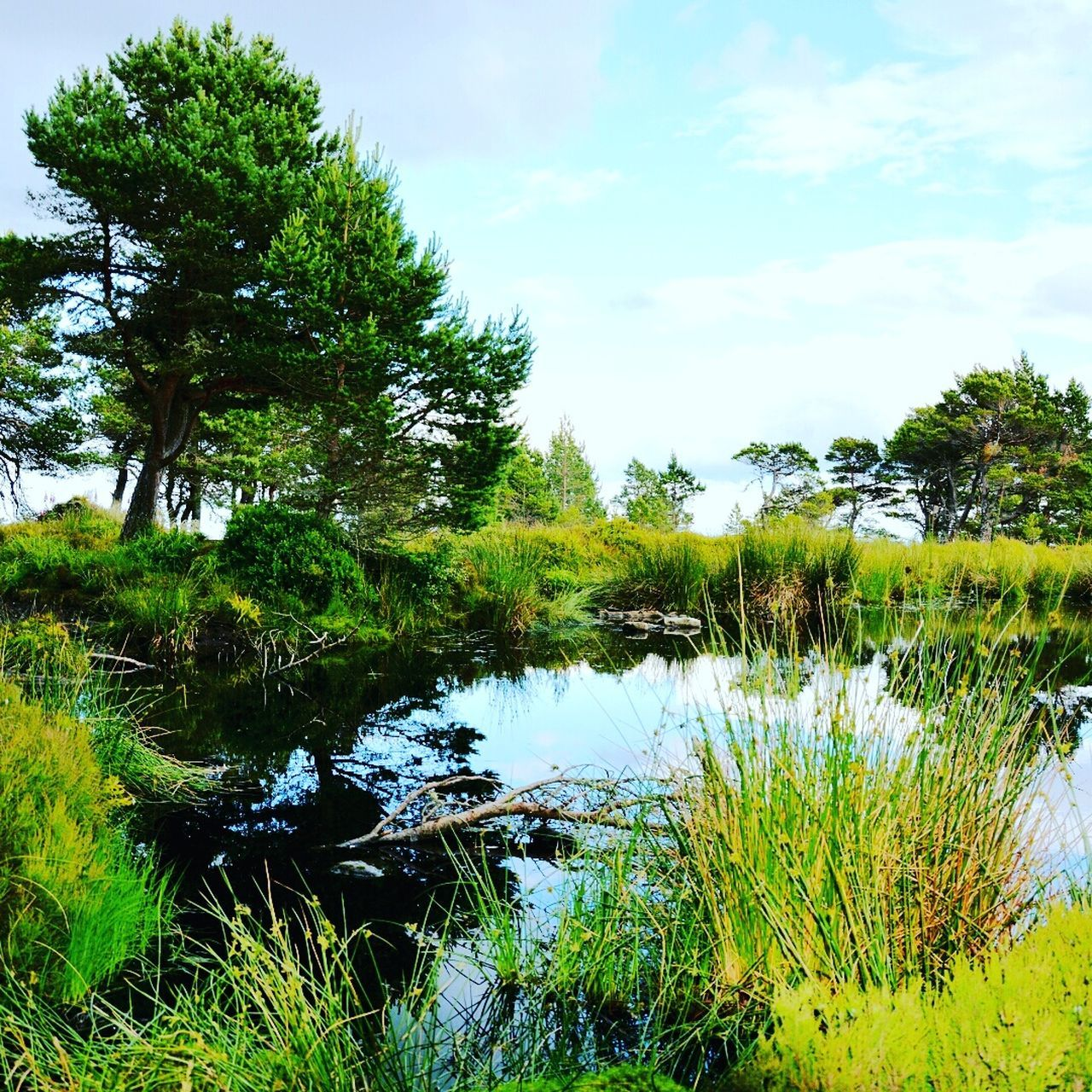 growth, nature, tree, grass, tranquility, lake, water, vegetation, tranquil scene, beauty in nature, outdoors, sky, scenics, forest, landscape, no people, day, blue sky