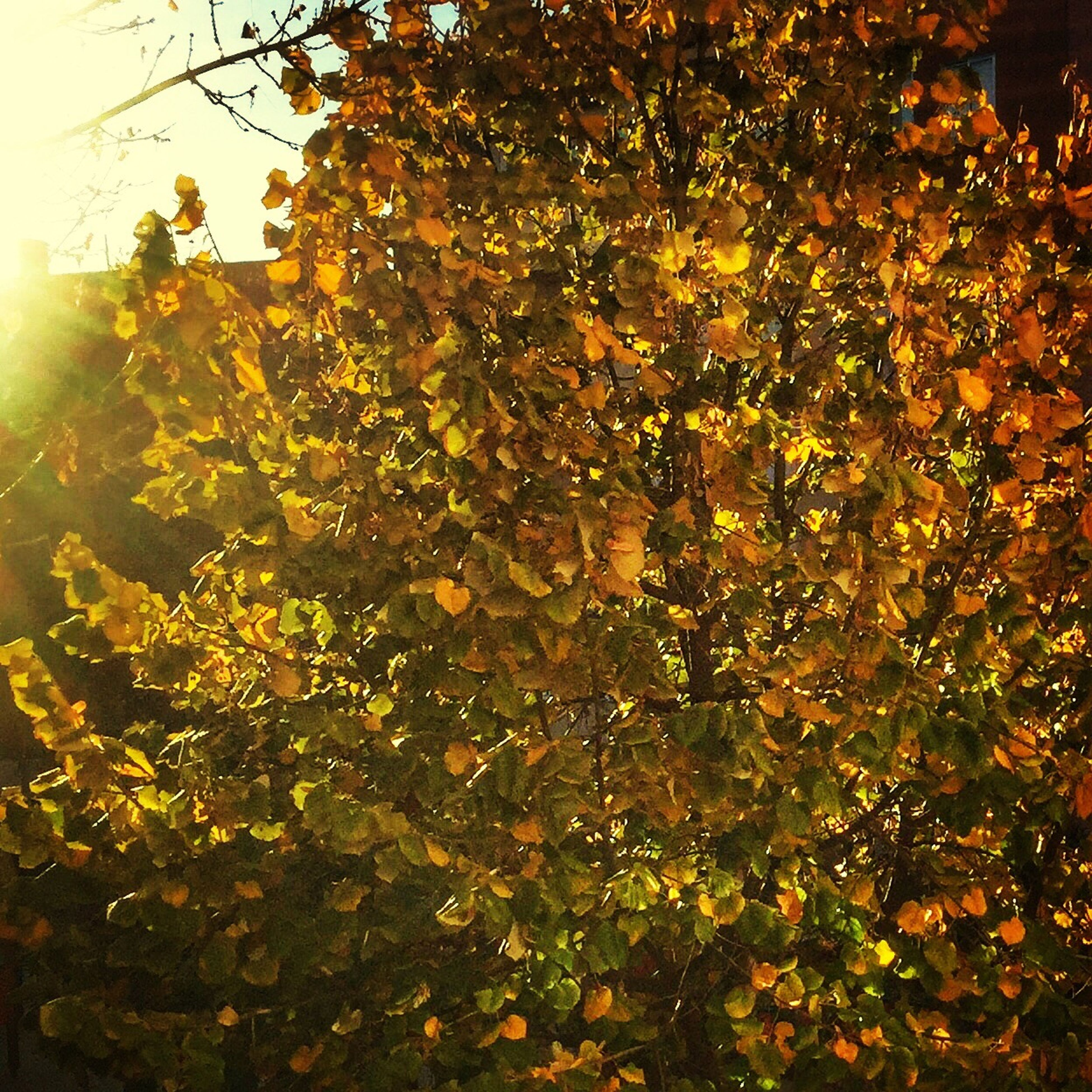 growth, tree, branch, nature, beauty in nature, flower, yellow, sunlight, plant, leaf, freshness, low angle view, season, tranquility, day, outdoors, no people, fragility, autumn, orange color