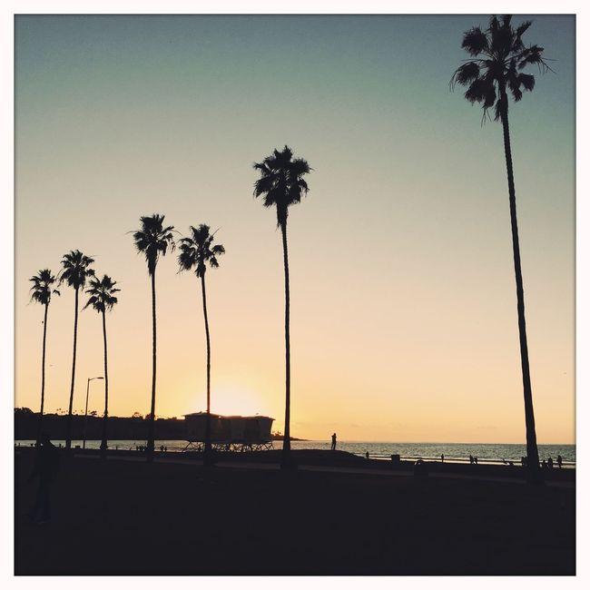 Sunrise_sunsets_aroundworld Soaking Up The Sun Evening Sun Beachphotography Beach Life Hipstamatic The EyeEm Facebook Cover Challenge San Diego Palm Trees