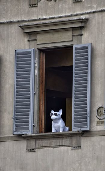 Window Dog No People Built Structure Architecture Building Exterior Blinds Window Frame Window Blinds Louvered Shutters Window Shutters Wooden Shutters Ceramic City Life The Week On EyeEm Life Is Art Florence Italy Street Photography Lifestyles City Street Travel Destinations Visit Italy Day Outdoors