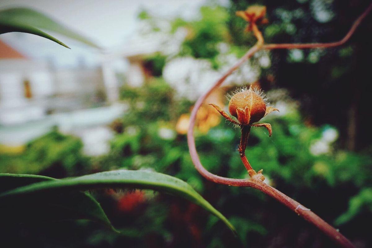 Tiny bud!!! Bud Withered Tree Tree Leaf