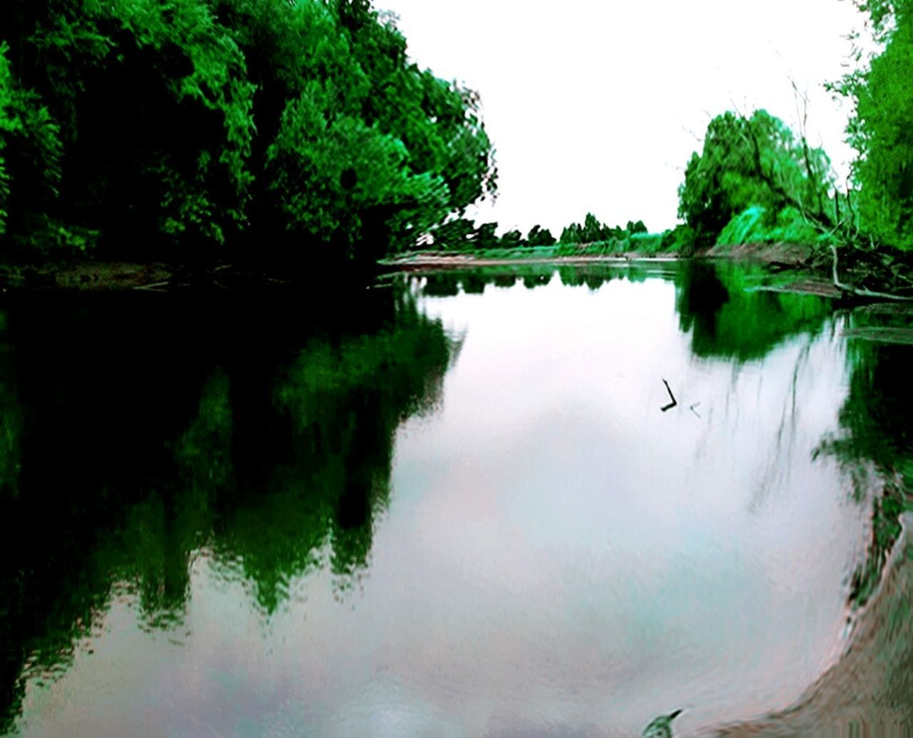 tree, water, reflection, nature, lake, beauty in nature, outdoors, day, no people, bird, animal themes, scenics, sky