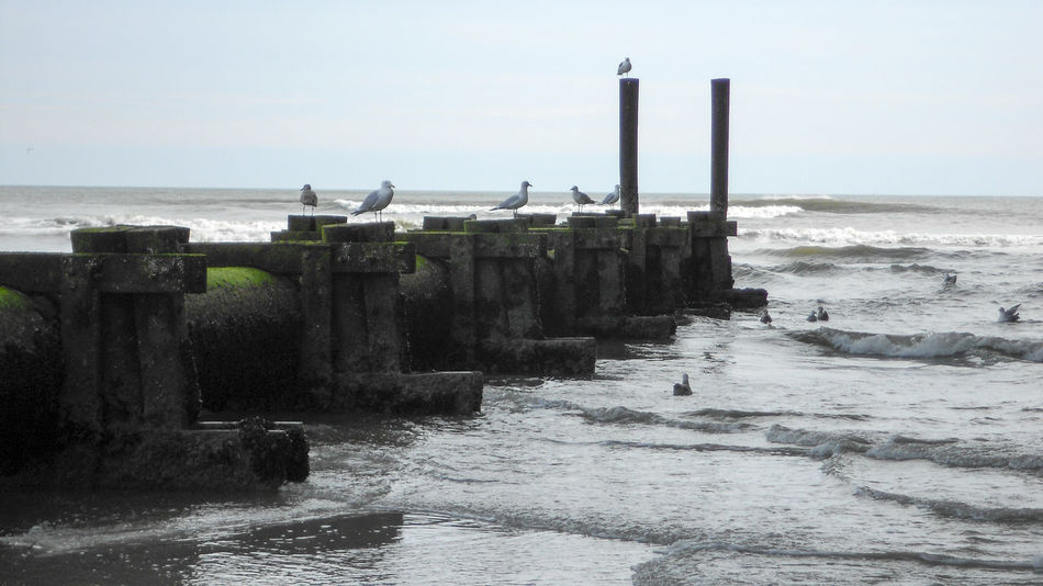 Barrier Barriers Beach Piling Horizon Over Water Nature No People Ocean Outdoors Sea Sea Wall Seagull Seagull Serenity Seagull. Seagulls Seagulls And Sea Shore Sky Water Wave Waves, Ocean, Nature Wooden Post