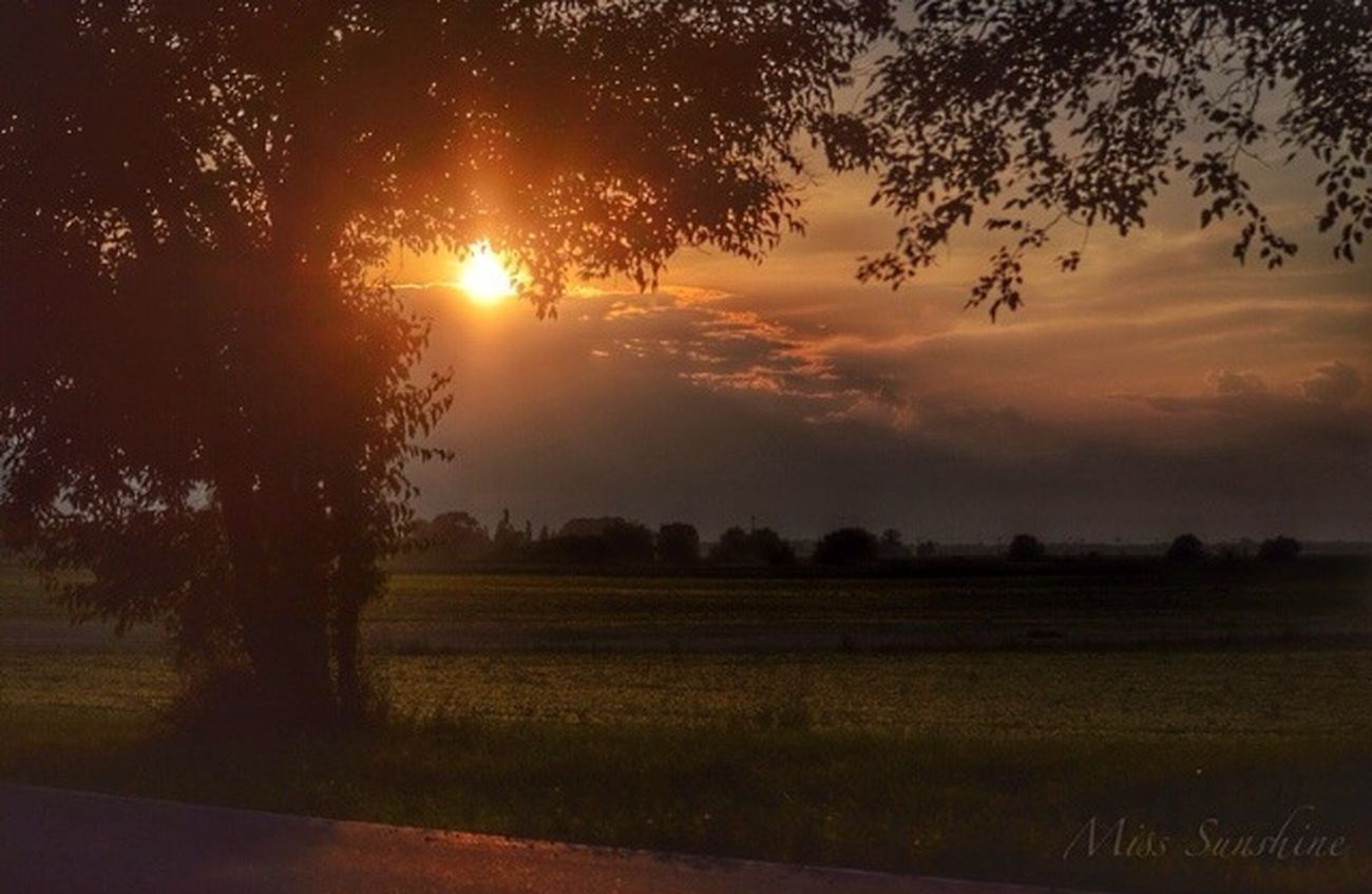Let your light shine on me ..... EyeEm Best Shots Sunset #sun #clouds #skylovers #sky #nature #beautifulinnature #naturalbeauty #photography #landscape Sunset✨trees✨ Thinking About You