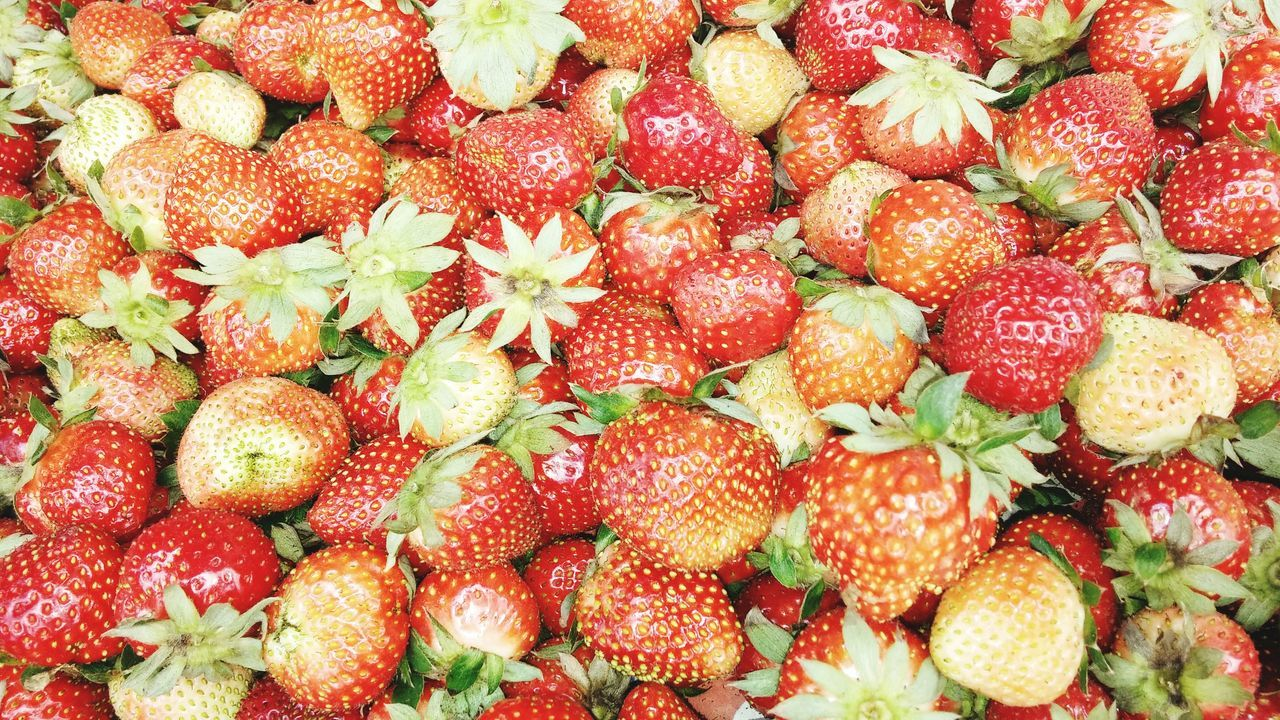 Your Baguio trip will not be complete if you were not visit the Strawberry Farm in La Trinidad Benguet Strawberry