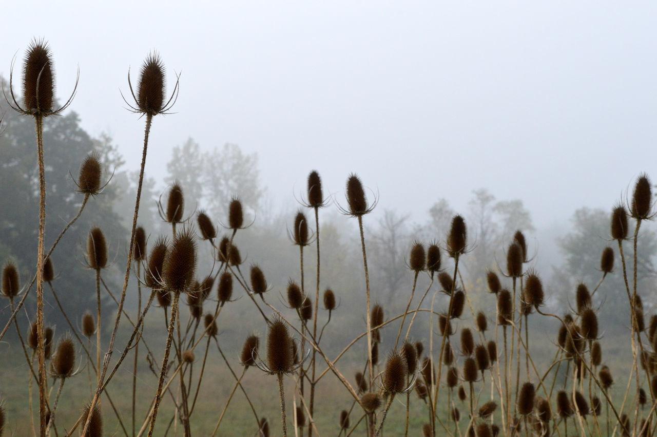Beautiful stock photos of meadow, Day, Fog, Grass, Meadow