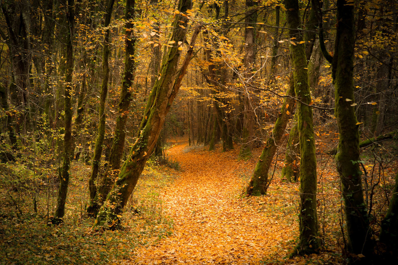 Forest in dordogne ( France) Autumn Brown Forest Landscape Leaves Nature Orange Color Wildlife Wood