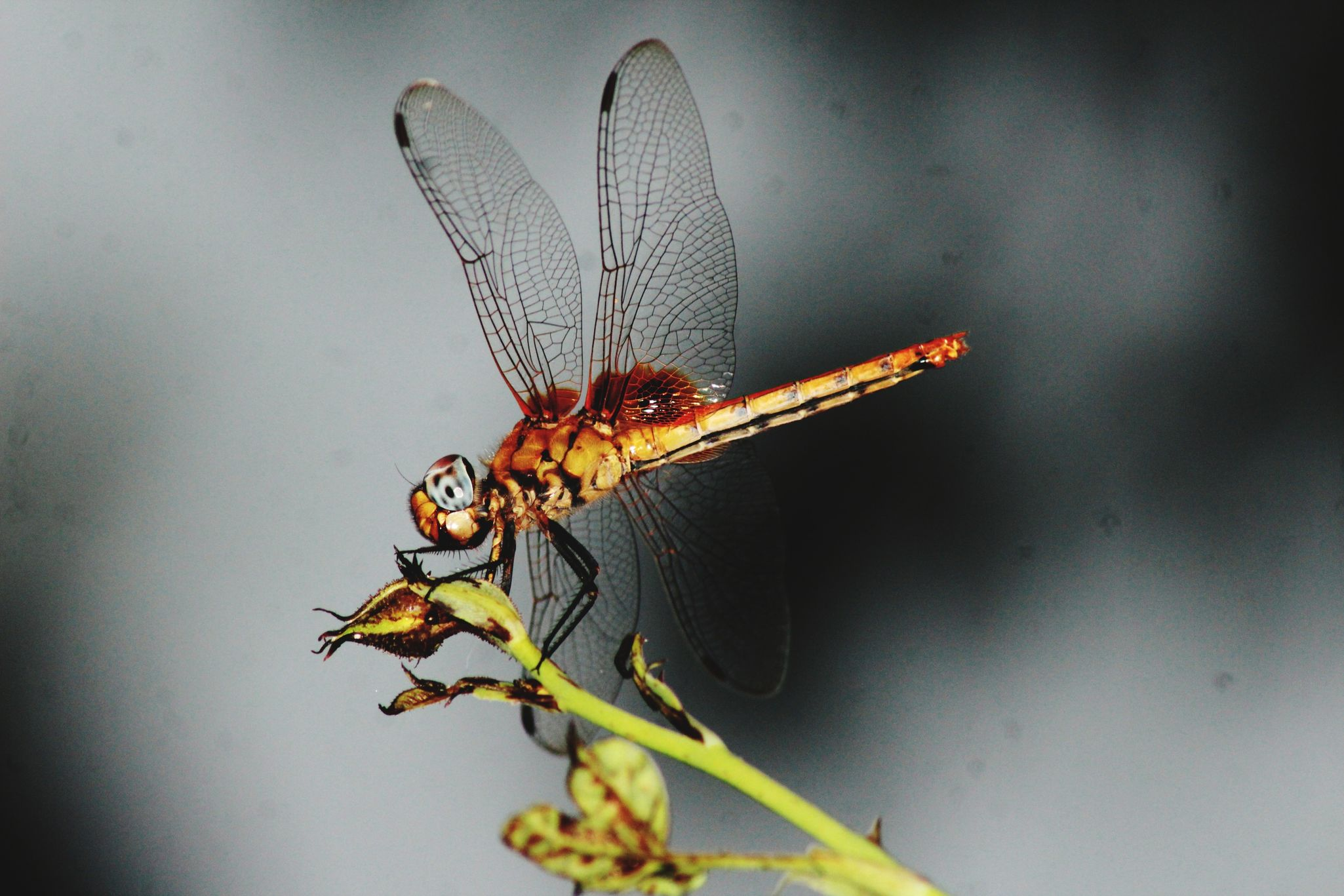 Dragon fly Nature,insect,color