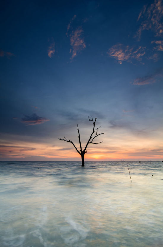 single tree surrounded by sea over sunset background Beach Photography Beauty In Nature Cloud - Sky Clouds And Sky Magic Hour Magical Light Malaysia Nature Rock Formation Scenics Sea Sky Splashing Stunning Collection Sunlight Sunrise Sunset Sunshine Tourism Tranquil Scene Waves, Ocean, Nature Wet Rocks White Waves