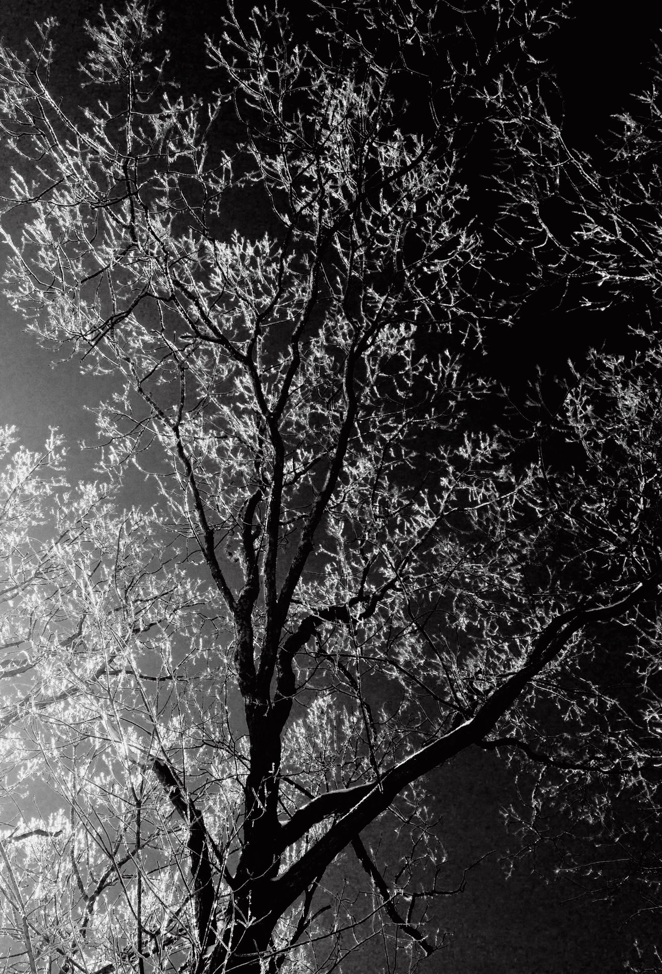 Nature IPhoneography Landscape_Collection Tree Beauty In Nature Eye4photography  Eyeemphotography Planetearth From My Point Of View Blackandwhite EyeEm Nature Lover Nature_collection Mother Nature Instadaily Still Life Monochrome Photography Taking Photos Blackandwhite Photography