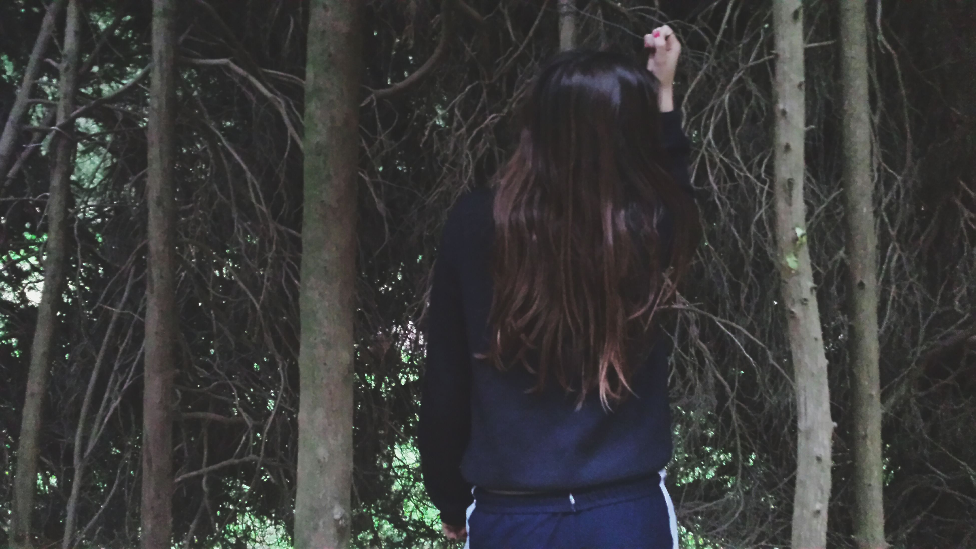 tree, standing, long hair, lifestyles, three quarter length, leisure activity, rear view, forest, sunlight, full length, side view, outdoors, mammal, young women, looking away, nature, day, young adult
