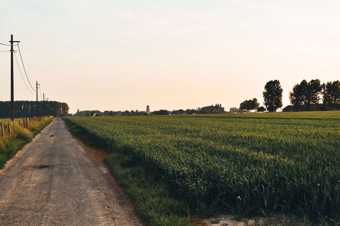 A walk in the countryside of my hometown Agriculture Clear Sky Day Field Growth Landscape Live For The Story Nature No People Sky The Way Forward Tranquil Scene Tranquility Tree