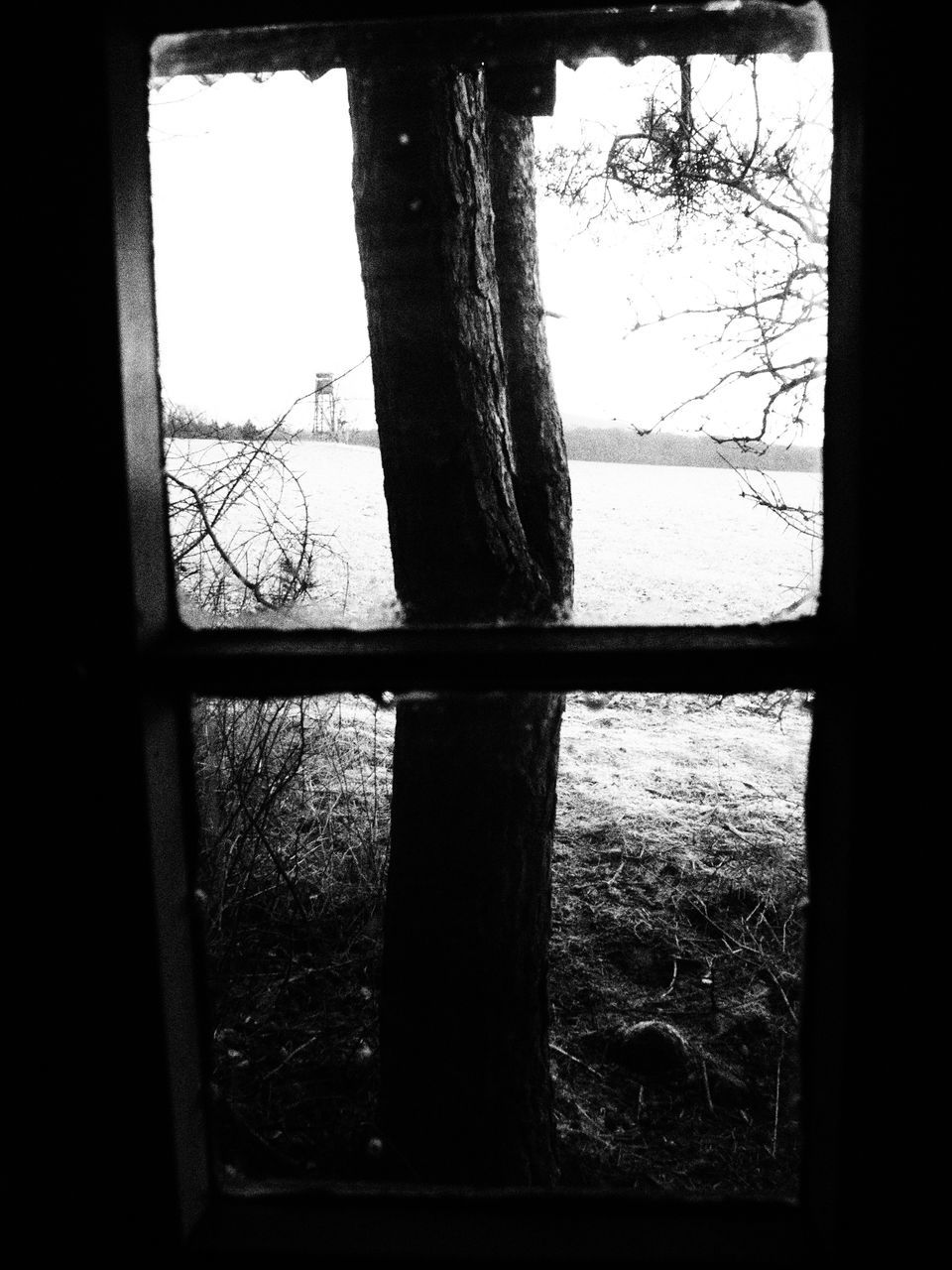 window, tree, indoors, silhouette, no people, day, bare tree, tree trunk, branch, nature, sky, close-up
