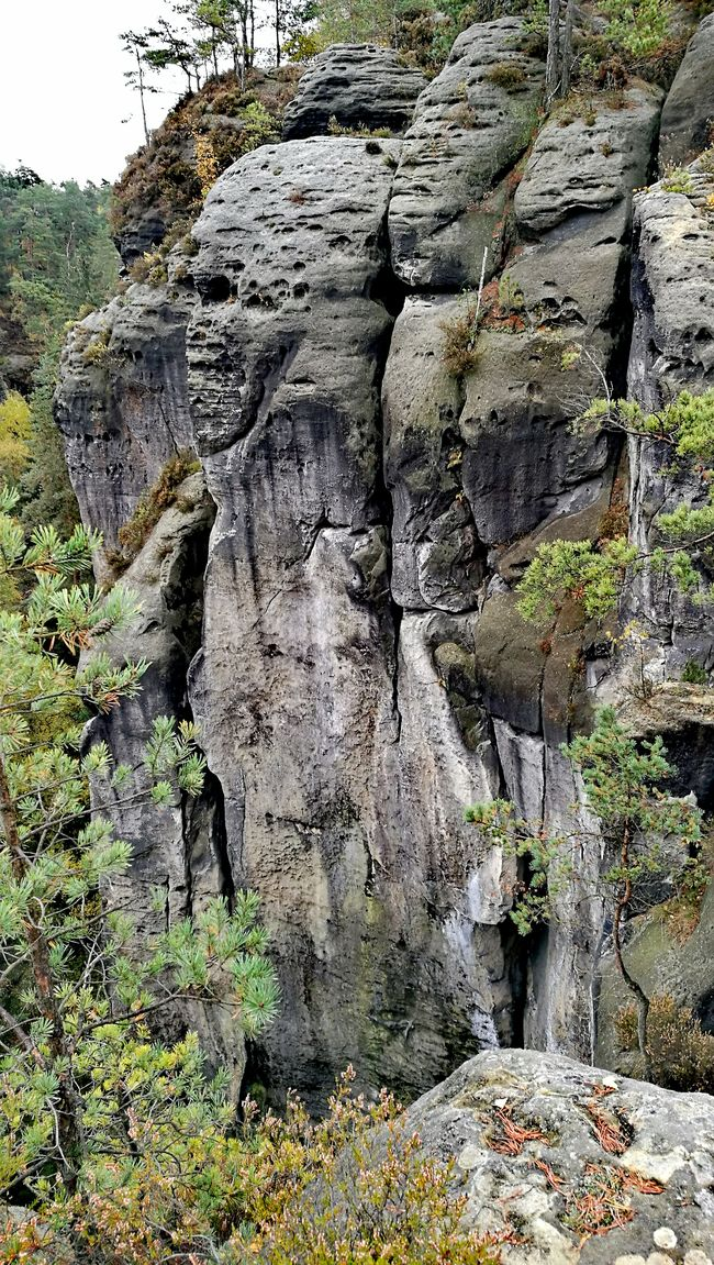 Little Mount Rushmore😁Tree No People Backgrounds Growth Close-up Horizontal Day Outdoors Nature Elbsandsteingebirge Germany🇩🇪 Sächsische Schweiz Rocks Rock Formation Seeing Things Skull
