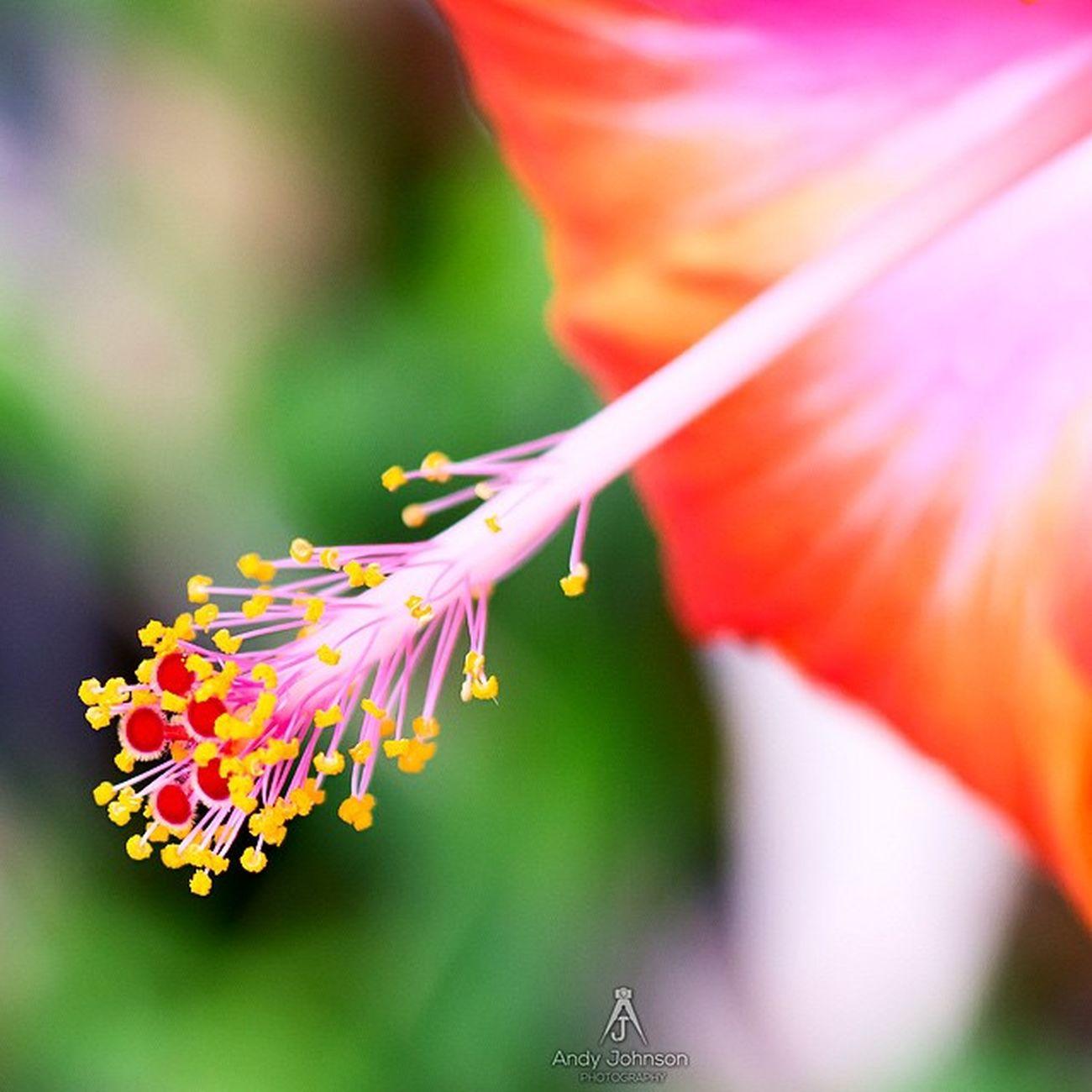Grenada GOLDENCLiCKS Nikoncapture NikonD7100 Nature Caribbean_beautiful_landscapes Hdr_beautiful_landscapes Westindies_landscape Icu_puertorico Ilivewhereyouvacation Ig_martinique Ig_caribbean Hibiscus