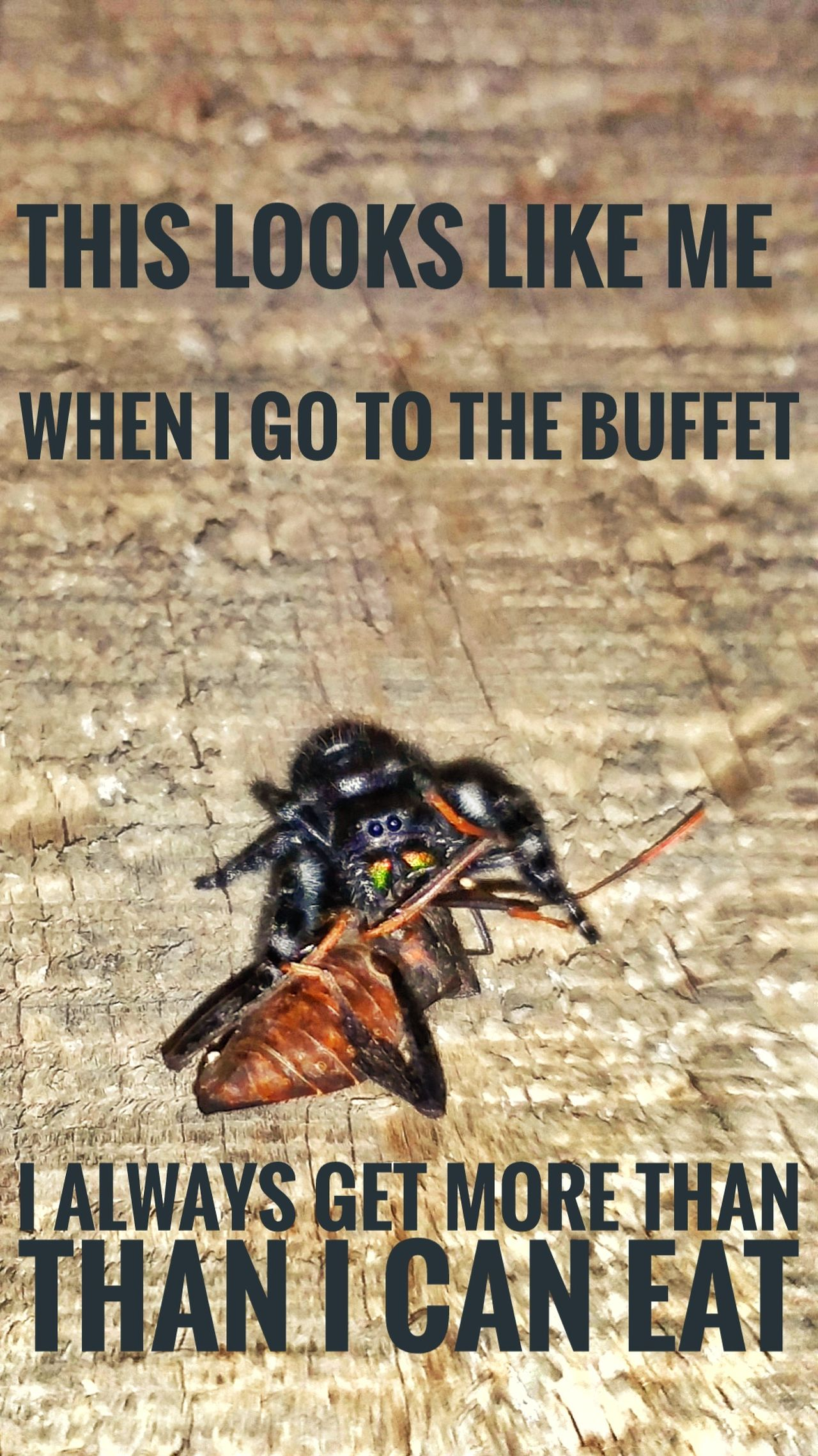 Text Capital Letter Communication No People Wood - Material Day Animal Themes Outdoors Funny Spider Quotes Spider Eating A Fly Spider Hunting Spider Eating Hungry Spider Macro Nature Stinkbug Wood Background Insects In Action Insects  Close-up Insects  Web Action Shot