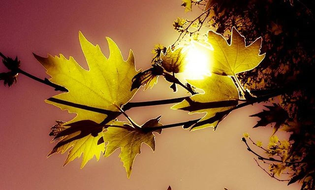 leaf, autumn, yellow, nature, change, no people, outdoors, plant, close-up, beauty in nature, day, fragility, sky