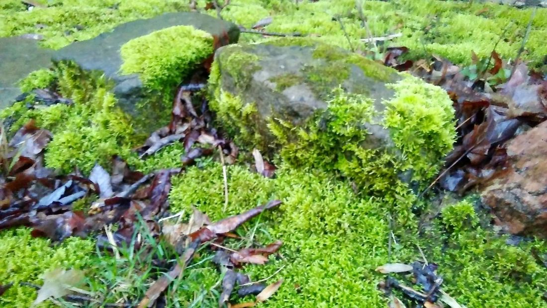 Green Color No People Outdoors Growth Day Beauty In Nature Nature Close-up Rocks