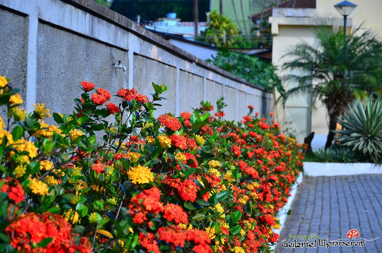 flower, growth, plant, outdoors, building exterior, day, nature, built structure, architecture, blooming, freshness, fragility, no people, beauty in nature, flower head