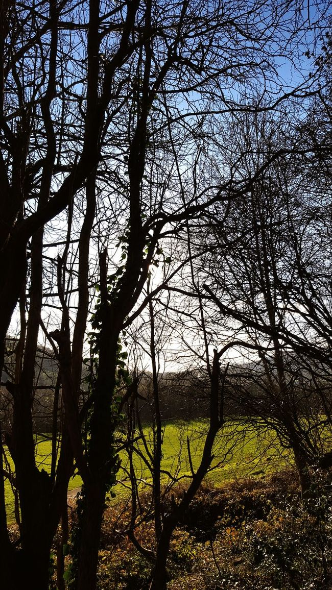 Woods Trees Nature_collection Sneak Peek