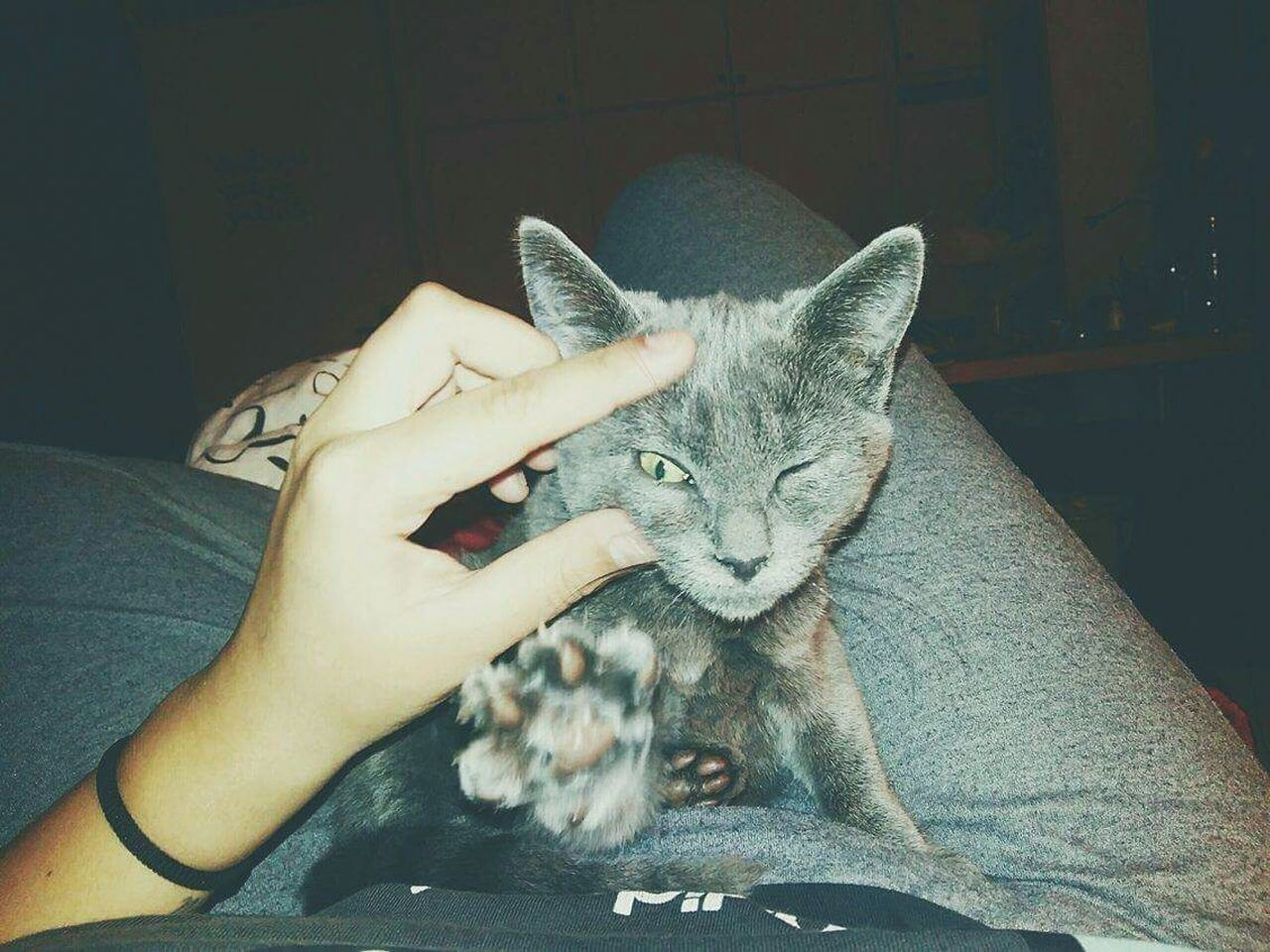 Pussycat Mybaby Misaya Comebackhome Please ❤ Pets One Animal Animal Relax Time  Chill Playing Loveyou♥