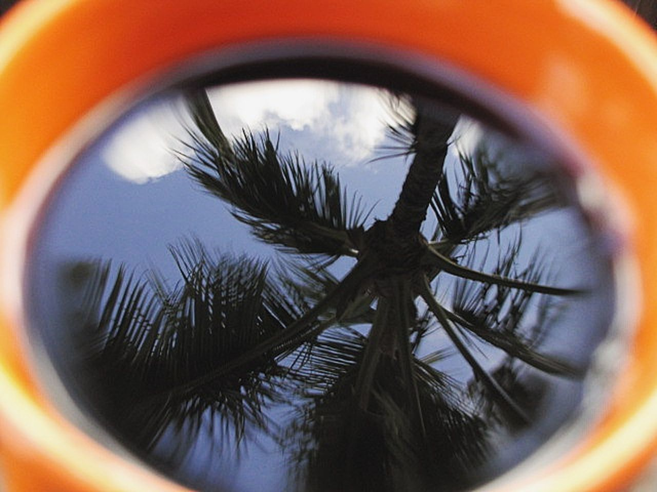 Throwback to the time when every cup of coffee came with a bit a paradise. Reflection Tree Coffee EyeEm Close-up Bokeh EyeEm Best Shots Getting Inspired Clouds Coconut Tree