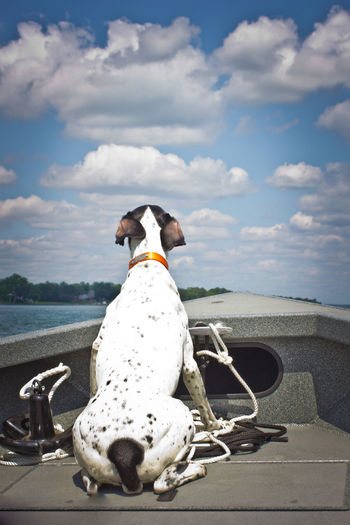 Going for a boat ride German Shorthair Pointer  Boat Ride Cloud - Sky Dog Domestic Animals German Shorthaired Pointer Looking Forward No People One Animal Outdoors Pets Power Boat Sitting Sky
