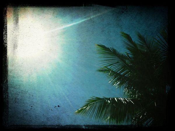 Sunshine Wintage AMPt_Nature Naturenature Lovers