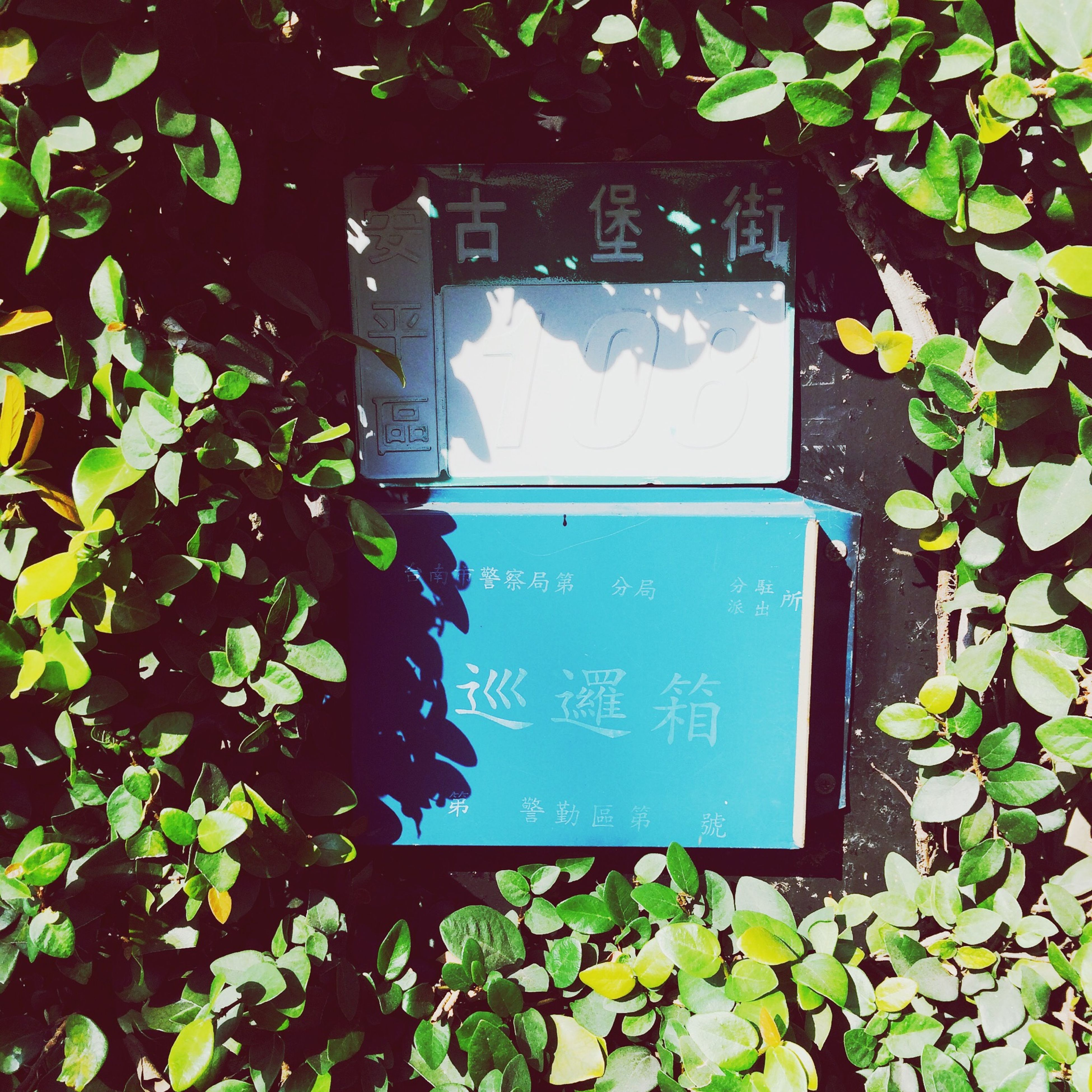 leaf, green color, plant, growth, building exterior, built structure, architecture, text, window, day, house, communication, close-up, green, ivy, no people, blue, low angle view, nature, outdoors