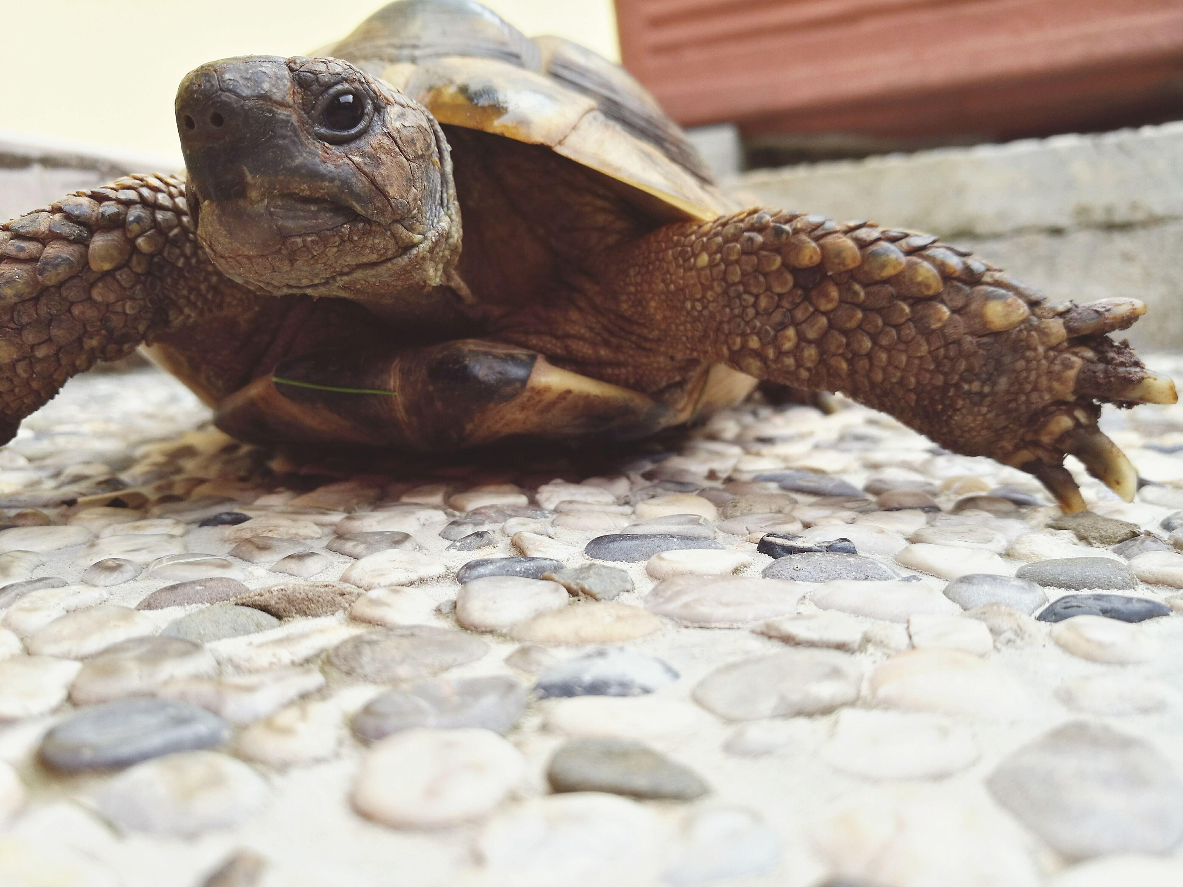 🐢🐢 Tartaruga Ninja Turtles Nature Nature Photography Granpa's Turtle photo by HuaweiP9