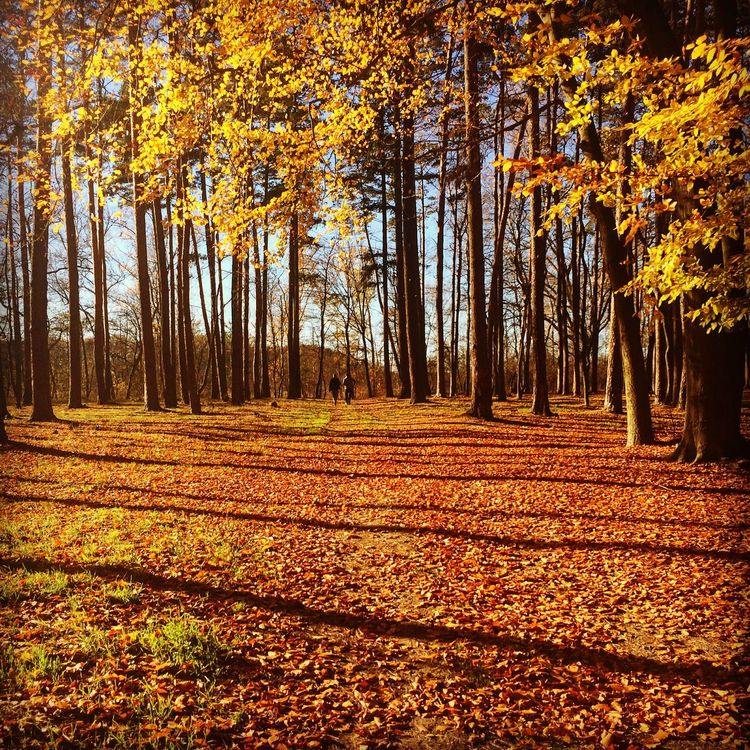 Hello World Walking Around Walking Chilling Fall Fall Colors Fall Beauty Atumn Lovely Weather Peace And Quiet