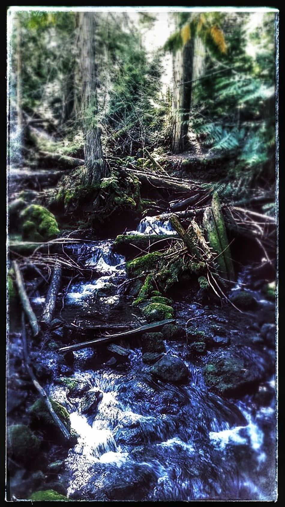 probably a little Overedited but thats okay. TheGreatOutdoors Nature