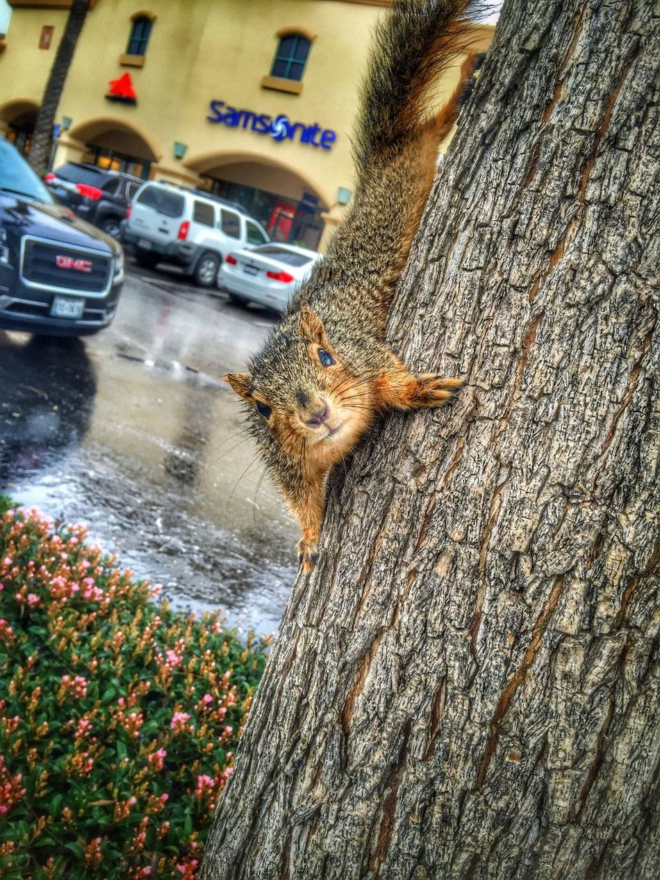 Made a new friend! Just wish he would come home with me. Squirrel Friends Meeting Friends